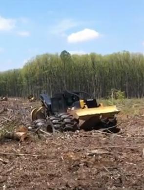 Avverkning av skog för pellets i USA