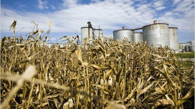 etanol-produktion-odling-lagring.jpg