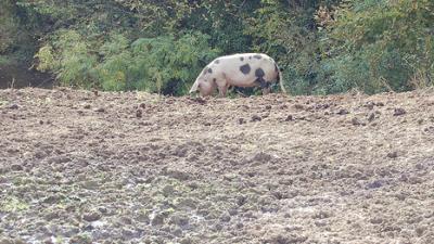 gris-i-naturen.png