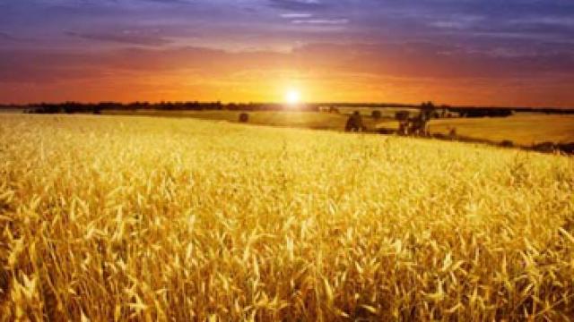 jordbruk-solnedgang.png