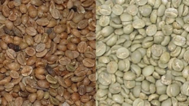 kaffe-arabica-robusta-sorter.png