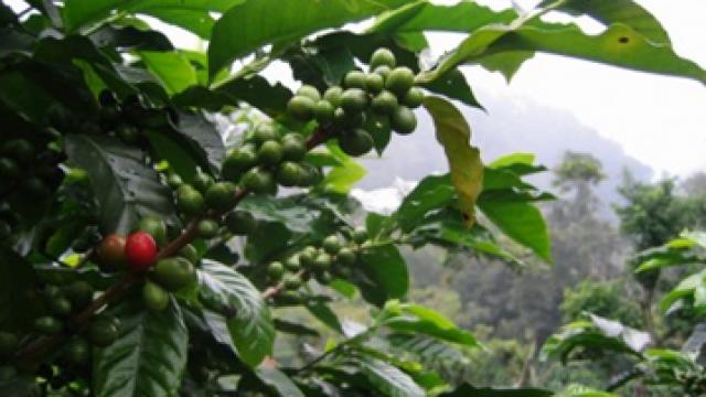kaffe-fonder-etf-etn-investera.png