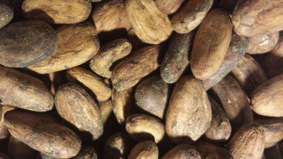 kakao-bonor.jpg