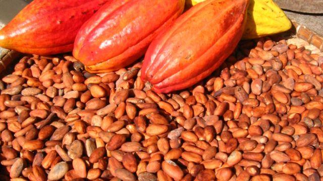 kakao-bonor-frukt.jpg