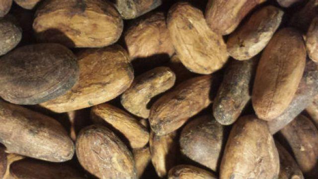 kakao-bonor-pris-termin-cc-coco.jpg