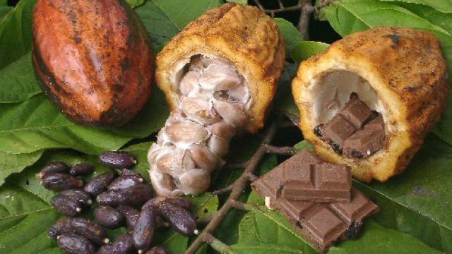 kakao-choklad-manipulera.png