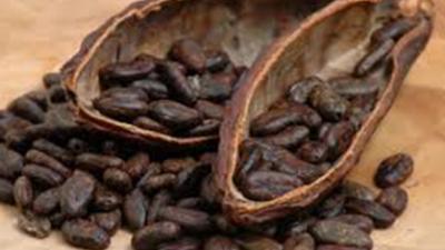 kakao-har-stigit-pris.png