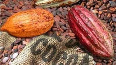 kakao-priset-ar-politiskt.png