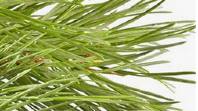 latvian-forest-investerar-i-skog.png