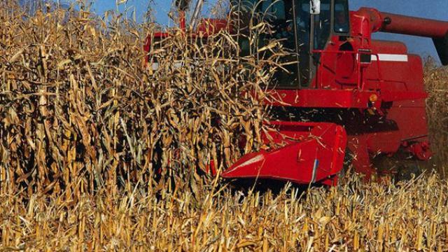 majs-jordbruk-cbot.png
