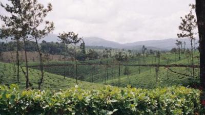 odling-av-drycker.png