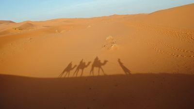 oken-kamelsiluett.jpg