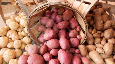 potatis-olika-sorter.jpg