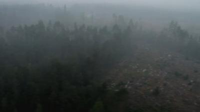 skog-brunnit-varmland.png