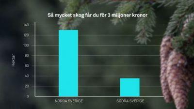 skog-for-investering.jpg