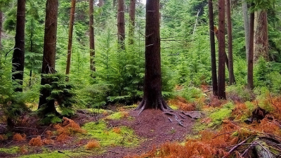 skog-skogsbolag-aktier.png