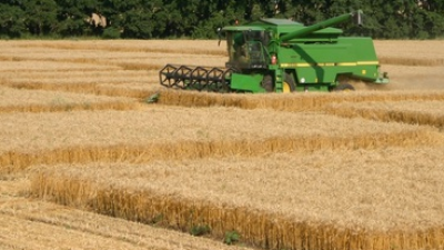 trigon-agri-jordbruk.png