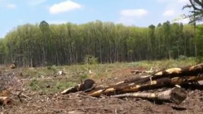 usa-europa-pellets-skog.png