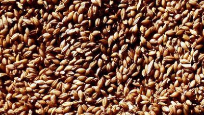 vete-korn-marknaden.png