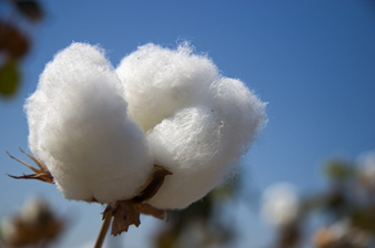 Leveranssvårigheter skapar brist på bomull
