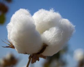 Terminshandeln i bomull i kraftig förändring