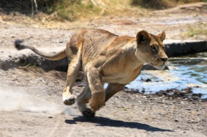Djurliv i Tanzania