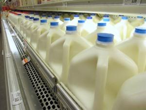 Ryskt importembargo drabbar svenska mjölkbönder