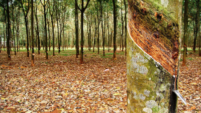 Priset på naturgummi faller på nyheter från Thailand