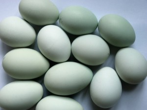 Hälsotrend får priset på ägg att explodera i USA