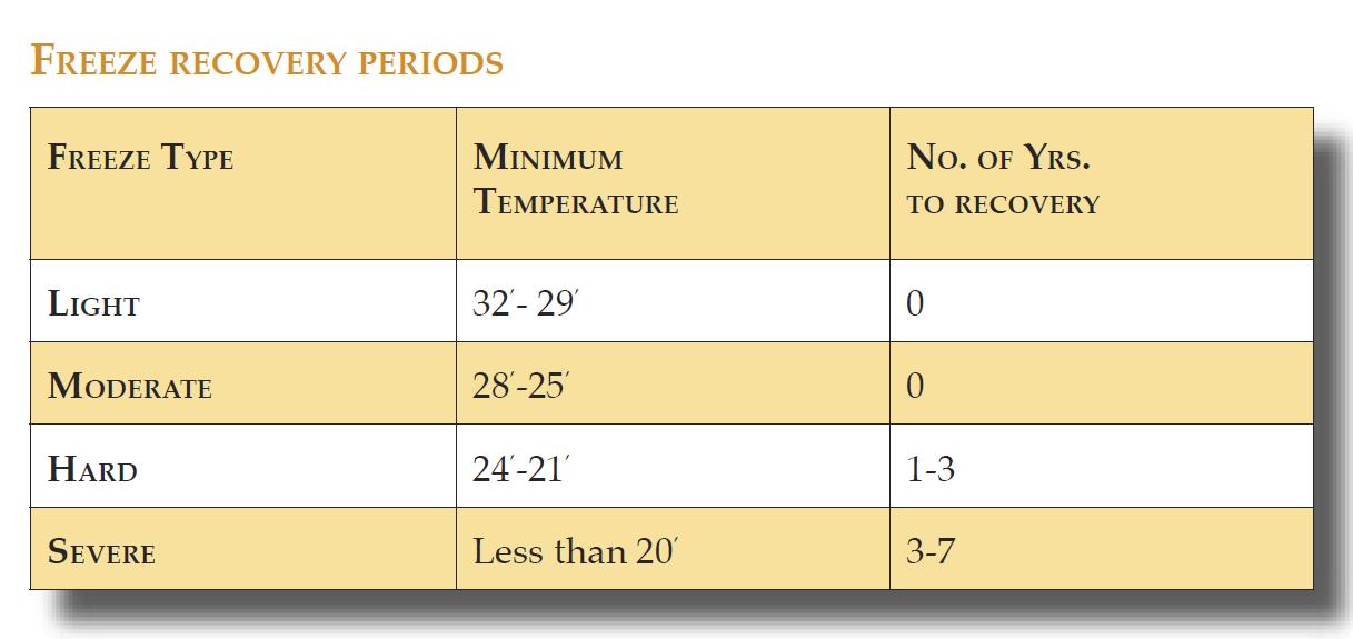 Hur länge det tar för apelsinodlingar i Florida att återhämta sig vid olika frysskador