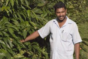 Indien - En växande kaffeproducent