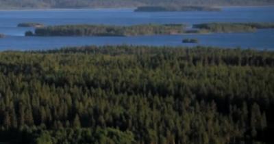 Hur du investerar i skog