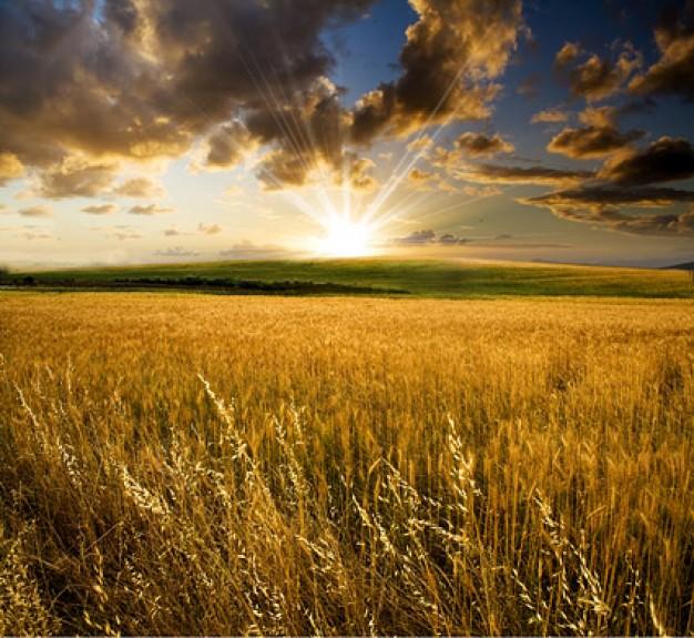 Jordbruksmark - En riskabel investering