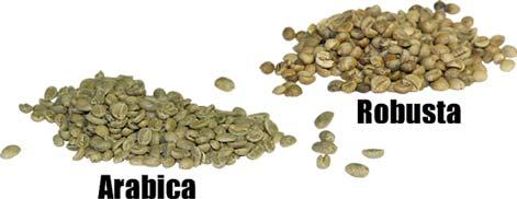 Kaffe av sorten Arabica och Robusta