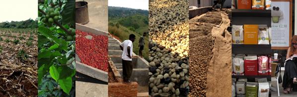 Kaffe från plantage till café