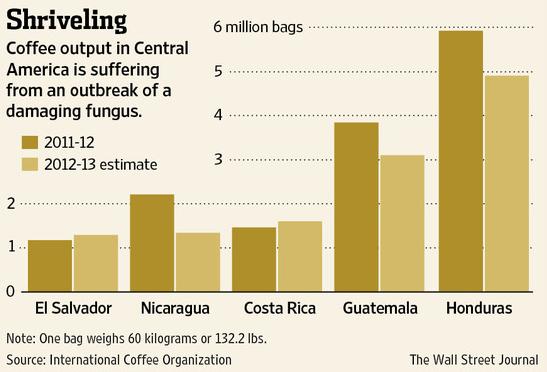 Kaffeproduktion i centralamerika påverkas av roya