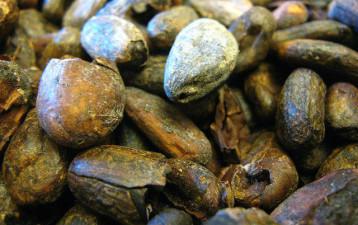 Kakaopriset stiger efter Ebola-hot