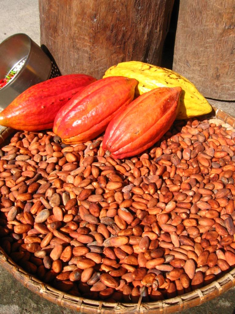 Kakao, bönor och frukt
