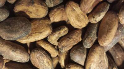 Har du koll på kakaopriset?