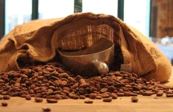 Kakao-bönor med säck och skopa