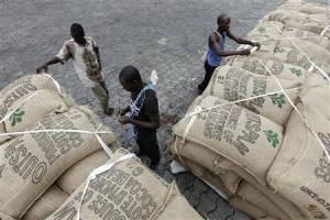 Kakao från Elfenbenskusten redo för export