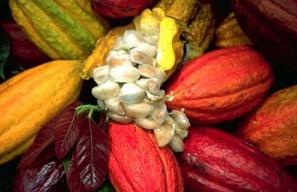 Rigorös kontroll av kakao
