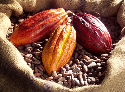 Kakao-frukt