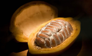 Kakao från Ghana - Råvaror