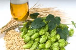 Korn - Råvaran som gav oss ölen