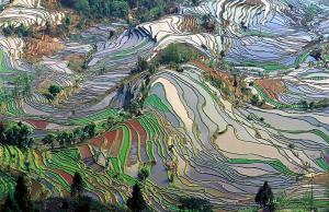 La Ninã - Väder påverkar jordbruket och priserna på spannmål