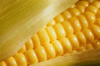 Vad betyder valet i Argentina för spannmålsmarknaden?
