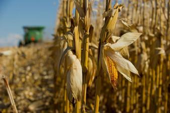 Priset på majs och sojabönor tynar bort