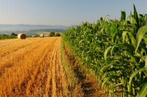 Nya terminer för lantbruk