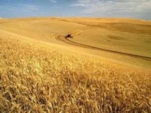 Odling av spannmål i Argentina